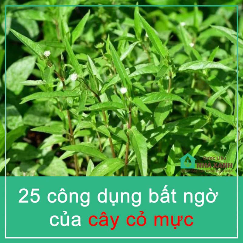 tac dung cay co muc