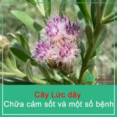 cay luc day