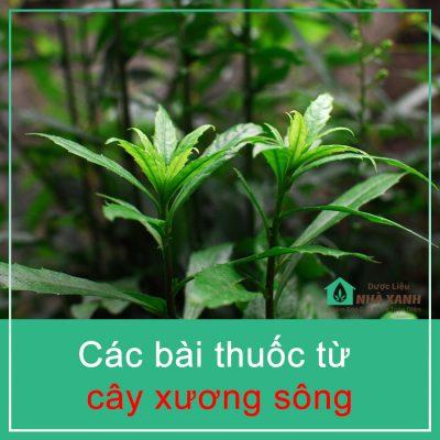 cay xuong song